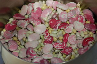 A variety of shell beans