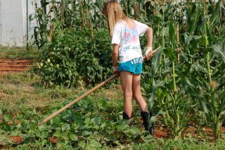 Hoeing garden weeds