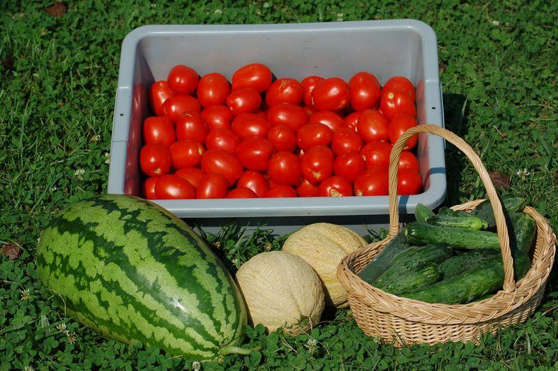 Harvest from my home garden