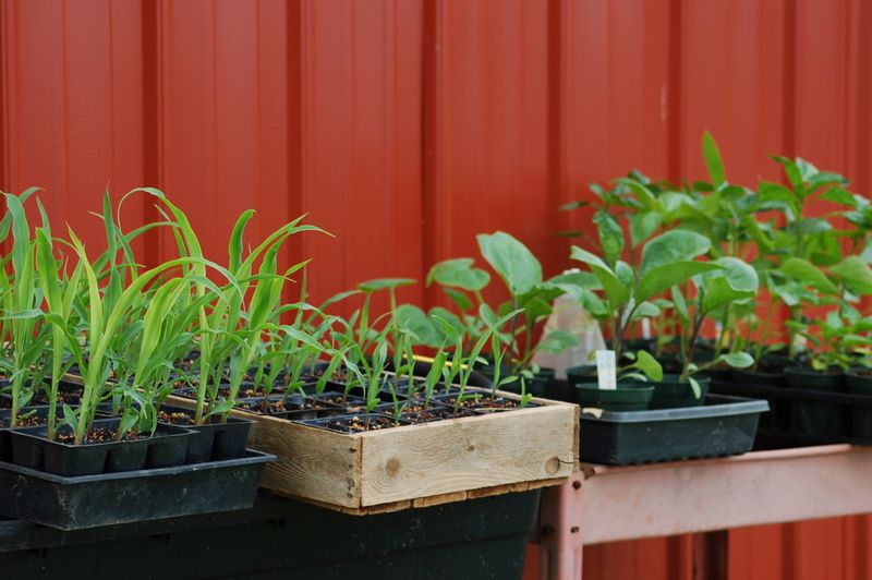 Seedlings outside on a warm, sunny day