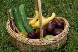 Vegetables from Uwharrie Farm garden