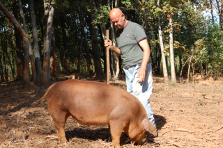 Larry with heritage pig at Uwharrie Farm