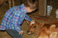 Our grandson, Jace, with Jersey calf